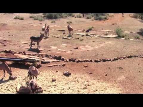 Lebanese Bowhunters - Monster Red Hartebeest, 2013 - Tshepe Safaris South Africa!