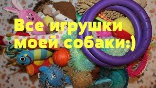 Все игрушки моей собаки. Йоркширский терьер Тиффани