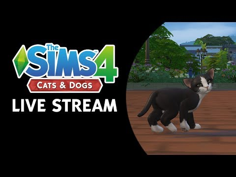 Let's Play The Sims 4 Cats & Dogs! (Thursday, November 9th @ 5pm Eastern Time)