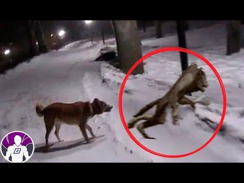 4 видео-доказательства того, что животные видят призраков