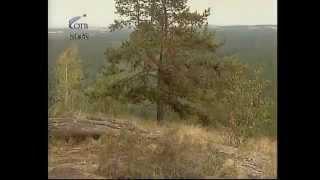 Карагайский бор (Карагайка) в Челябинской области