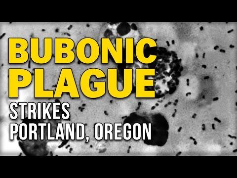 BUBONIC PLAGUE STRIKES PORTLAND, OREGON