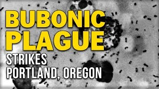 BUBONIC PLAGUE STRIKES PORTLAND, OREGON