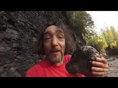 Wow Epic Monster Ammonite Fossil Trent River Canada