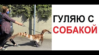 Лютые приколы. Выгуливаю собаку в карантин. собаку. СОБАКУ !!! ААААА!!! MyTub.uz