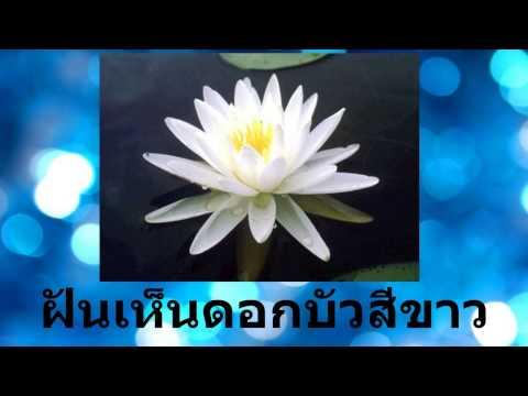 ฝันเห็นดอกบัวสีขาว