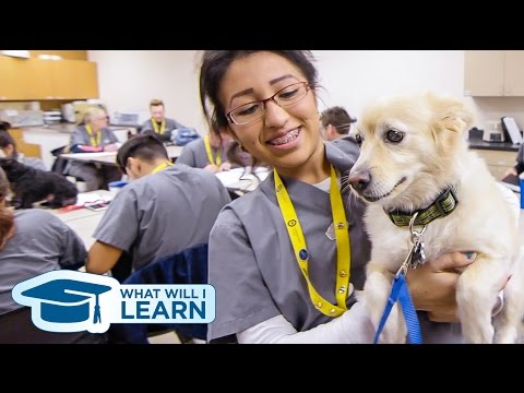 Veterinary Assisting Program | What Will I Learn?