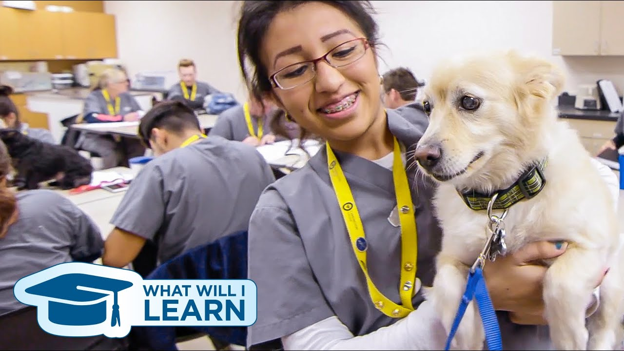Veterinary Assisting Program What Will I Learn Youtube