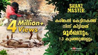 A cobra and 13 baby cobras spotted inside granite foundation | Vava Suresh | Snakemaster EP 465