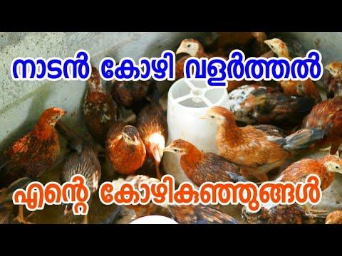 Download തനി നാടൻ കോഴികൾ [ECO OWN MEDIA] Naadan kozi kunjungal Malayalam 2018