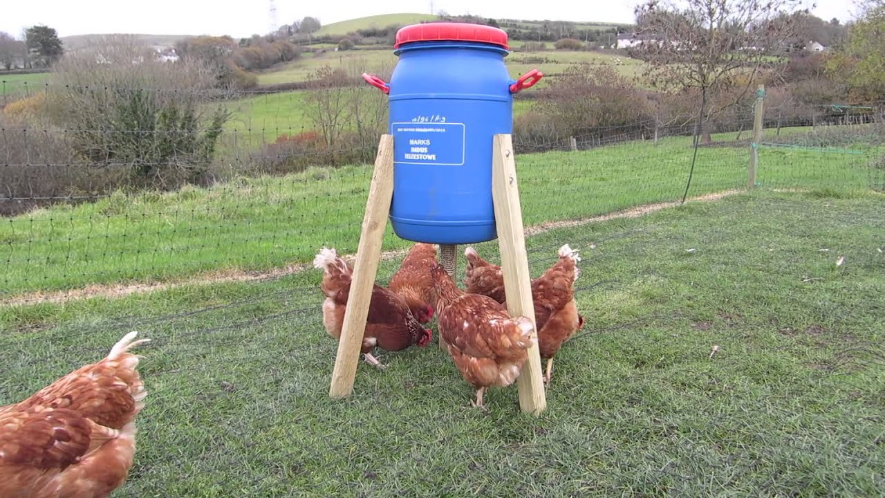 Drum Feeder And Chickens Youtube