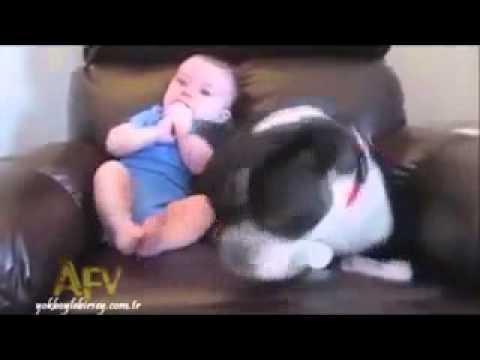 Hund Erschreckt Sich Vor Baby 😆