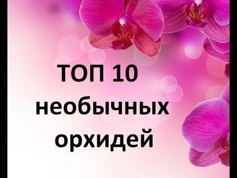 ТОП-10 самых необычных орхидей