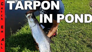 TARPON in Freshwater POND!