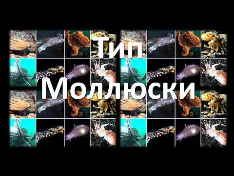 9. Моллюски