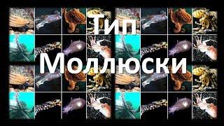 9. Моллюски - строение (7 класс) - биология, подготовка к ЕГЭ и ОГЭ 2018