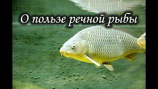 О пользе речной рыбы