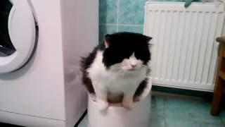 Автоматический туалет для кошек и мелких собак Kopfgescheit (Sly Cat, PetWC)