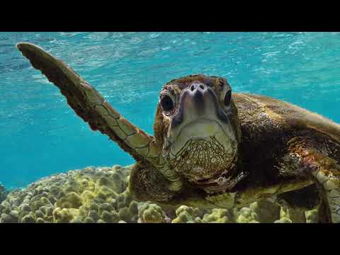 Impact of Plastic Pollution on Sea Turtles