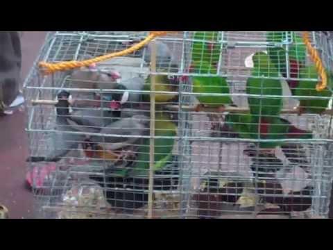 Plaza Miranda vendor's Bird for Sale