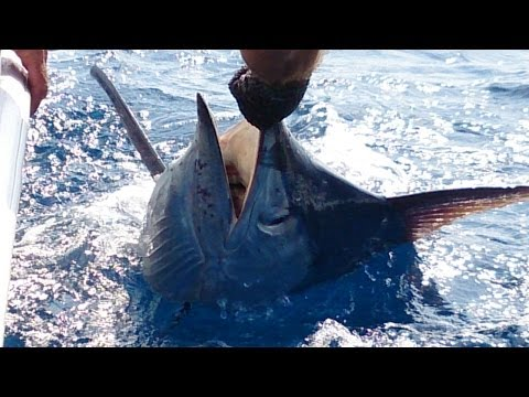 Deep Sea Fishing in St Lucia - Wave Dancer Fishing Charters Saint Lucia