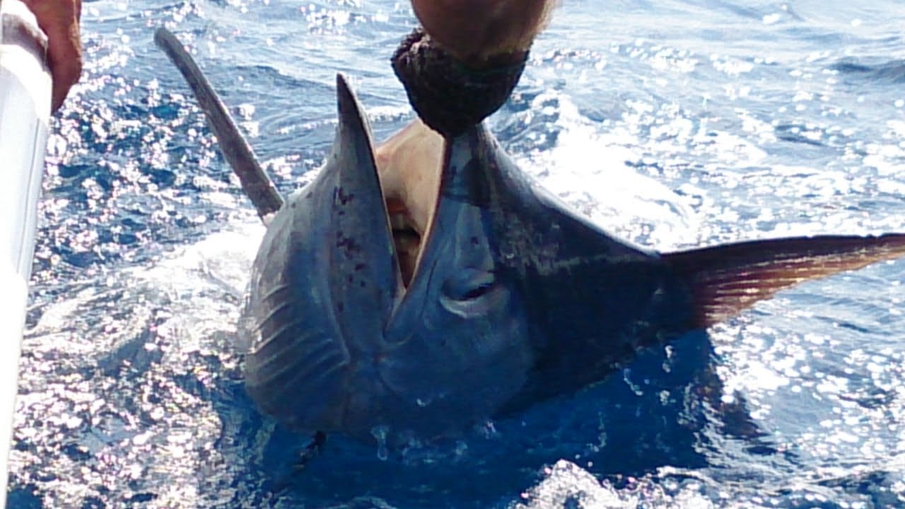 Deep sea fishing in st lucia wave dancer fishing for Deep sea fishing st lucia