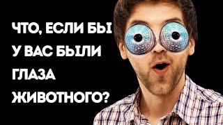Что, если бы у вас были глаза животного (вы могли бы заглянуть себе в ухо!)