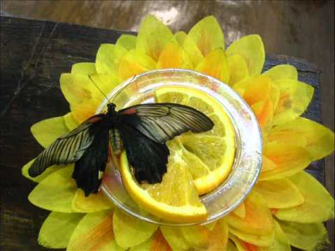 Объявление раздела животные. Живые куколки для выведения дневных бабочек купить, продать или отдать в самарской области на avito.