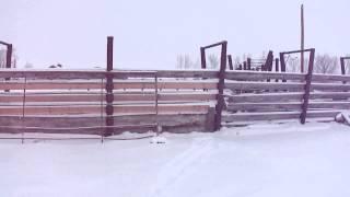 Cobb Charolais Ranch - Augusta, Montana