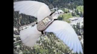 Na czym polega hodowla i lotowanie gołębiami pocztowymi...