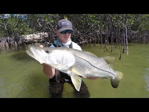 Her First Time!!!!! (Snook Fishing Mangroves)