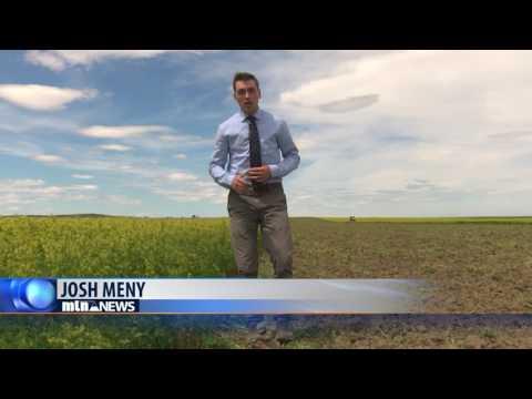 BIG SANDY ORGANIC FARM 6-19-17
