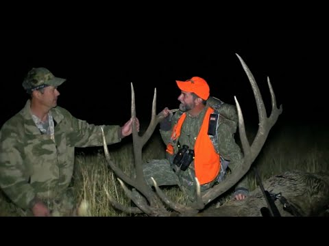 Will Primos Hunts Trophy Colorado Elk