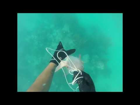 Spearfishing biscayne bay 2017