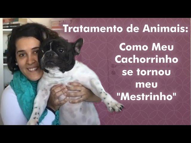 Tratamento de Animais: Como meu cachorro se tornou meu
