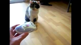 Смешные кошки, приколы  Кошка против эпиляторa   Кошка боксирует