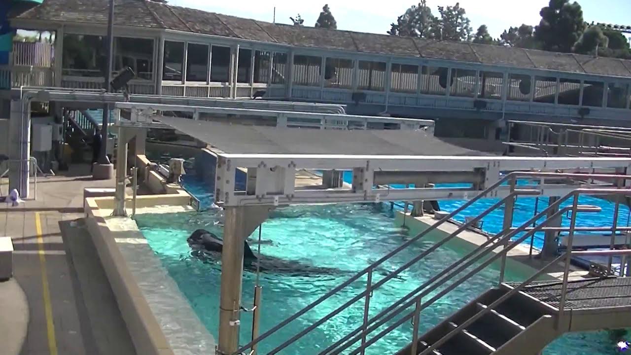 False Bottom Floor Renovation 1 Of 3 Nov 19 2014 12 42pm Seaworld San Diego Youtube