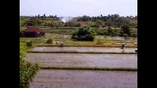 Bali Farmers Planting Rice