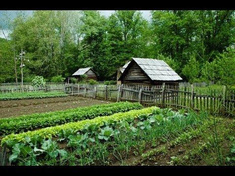 Полезное соседство: В каком порядке сажать овощи, чтобы они дали отменный урожай