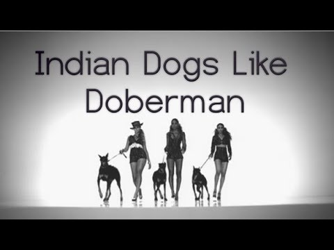Indian Dogs like Doberman