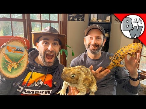 Mario & Coyote Livestream!