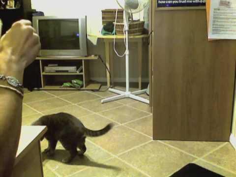 high tech cat litter boxes