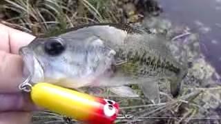 このカラーはイバラ釣り具のオリジナルカラーが元祖だったと思います。