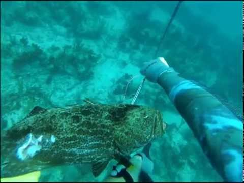 Spearfishing Bahamas 2014