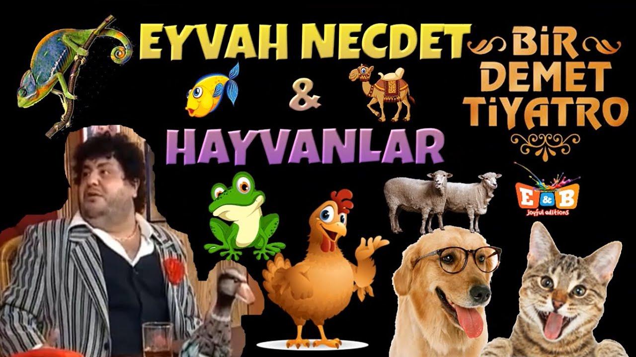 EYVAH NECDET & HAYVANLAR / Bir Demet Tiyatro