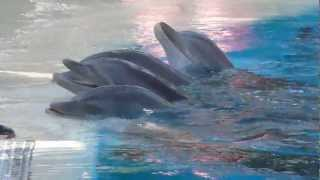 Download Dolphin Show at Siegfried & Roy's Secret Garden & Dolphin Habitat Mp3 and Videos
