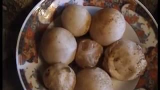 Как приготовить настойку из гриба Веселка.