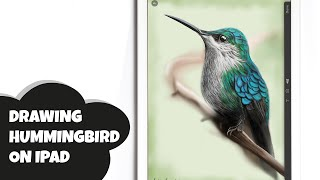 IPAD ART: HOW I DRAW A HUMMINGBIRD WITH PAPER BY FIFTYTHREE