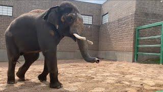 Asian Elephant Training with Doc