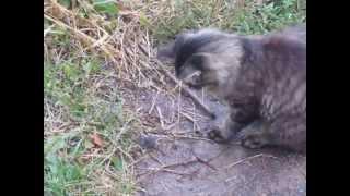 Игра Кошки Мышки. Реальное Видео - 2